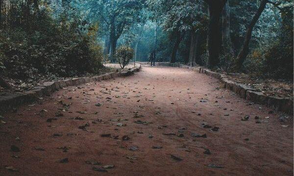 El camino del dejado, del pionero y del inteligente… como conseguir lo que quieras en la vida